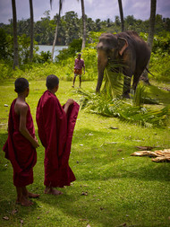 Sri Lanka's Elephants