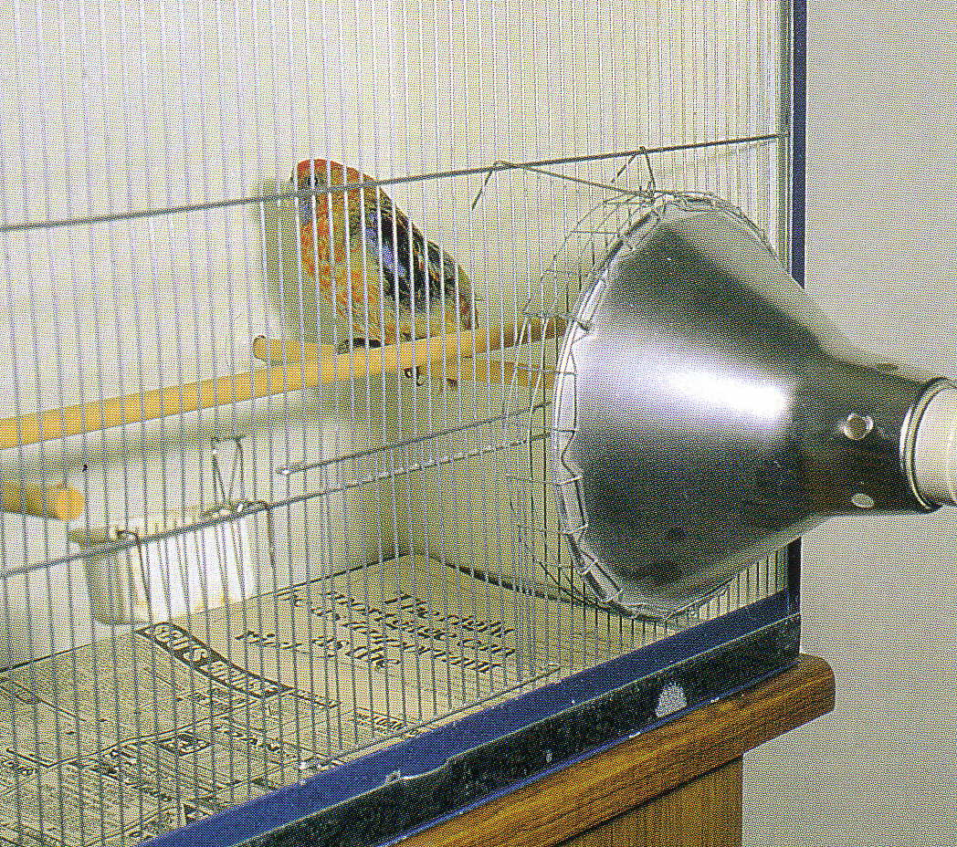 A bird cage with an infrared lamp