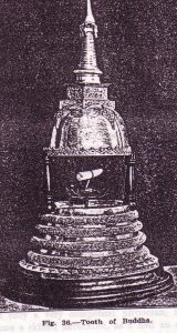 photo (Fig. 36), Dr. Nicholas Senn presents as the 'Tooth of Buddha', which is preserved in Kandy Sri Dalada Maligawa (Temple of the Sacred Tooth Relic)